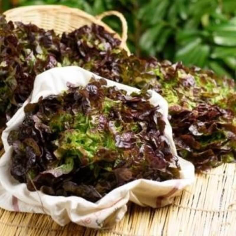 Salade - Feuille de chêne - Pièce