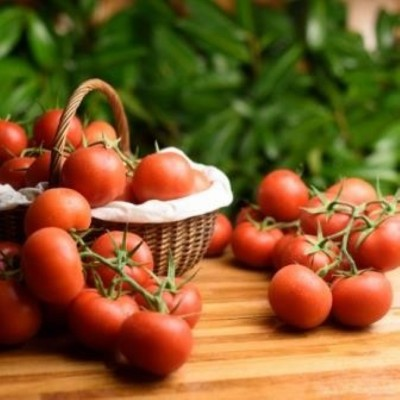 Tomate - Ronde en grappe - 500 gr (environ)