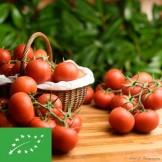 Tomates grappes BIO - 1 kg (environ)