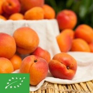 Abricots - Cat 1 - 1 kg (environ)