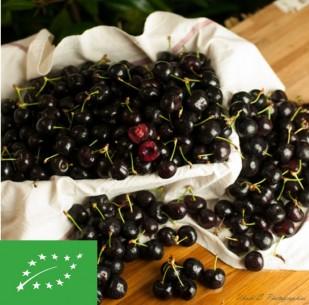 Cerises - Burlat Bio (500 gr)