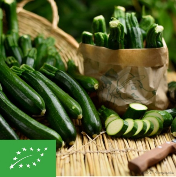 Courgettes BIO (France) - 500 g (environ)