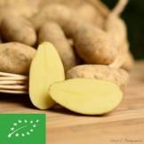 Pommes de terre Nicolas Nouvelle BIO - 1 kg (environ)