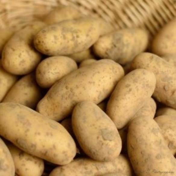 Pommes de terre Annabelle - sac de 10 kg (environ)