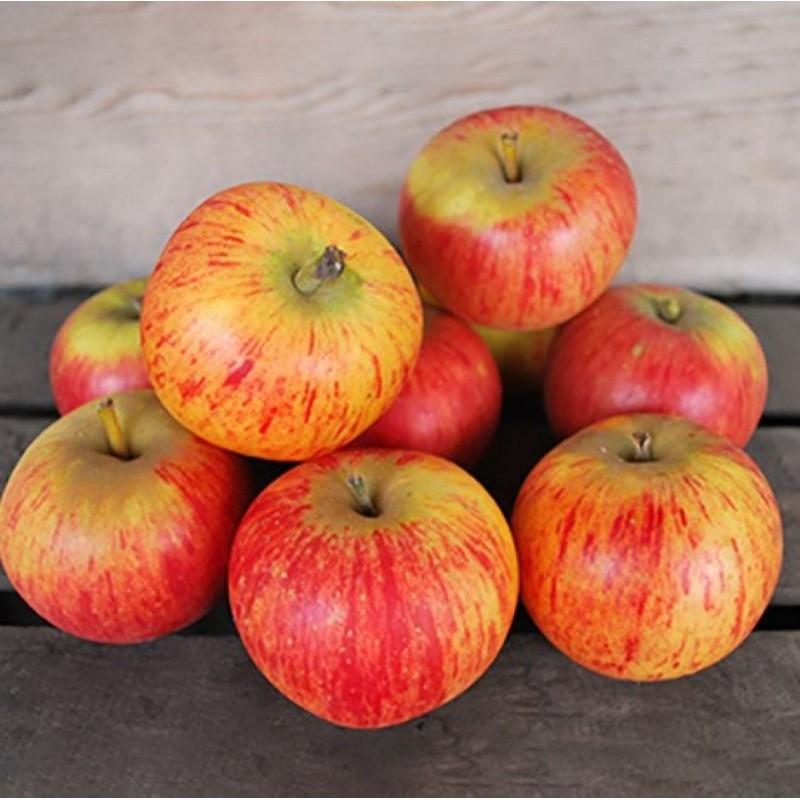 Pomme Reinette - 500g