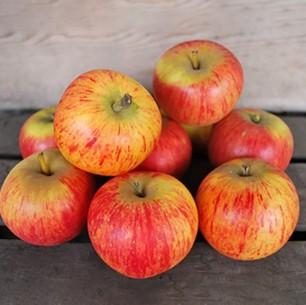 Pommes - Reine de Reinette - 1 kg (environ)