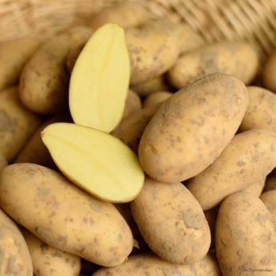 Pommes de terre Gourmandine - 3 kg (environ)
