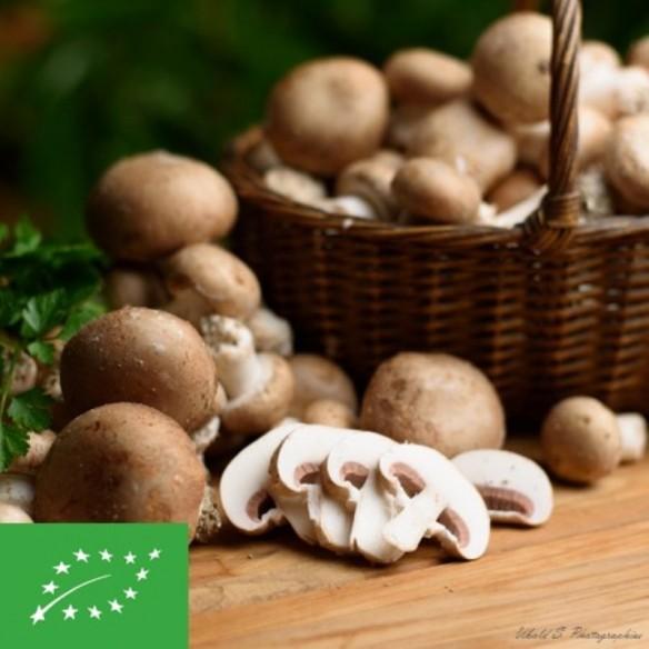 Champignons bruns BIO - 500 gr (environ)