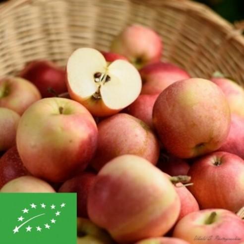 Pomme - Gala Bio - 1 kg (environ)