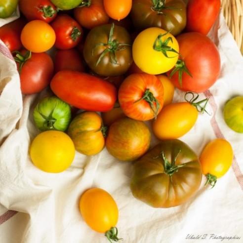 Tomate - Assortiment de variétés anciennes - 3,5 kg (environ)