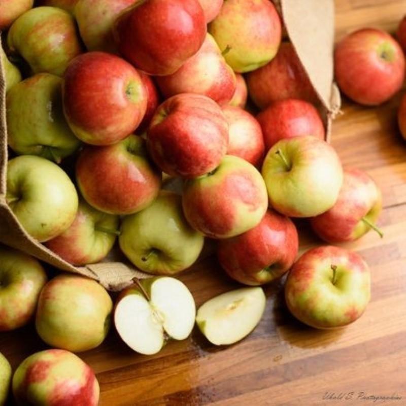 Pomme Elstar BIO - 500 gr (environ)