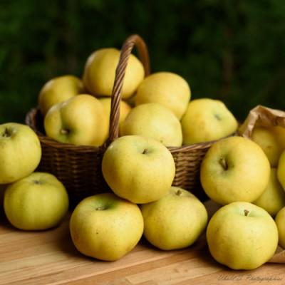 Pommes Chanteclerc- 0,5 kg (environ)